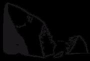 TIBURON-VECTOR-NAZANSHARK-LOGO-1080