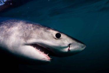 Nazan Shark Fantástica criatura Sudáfrica